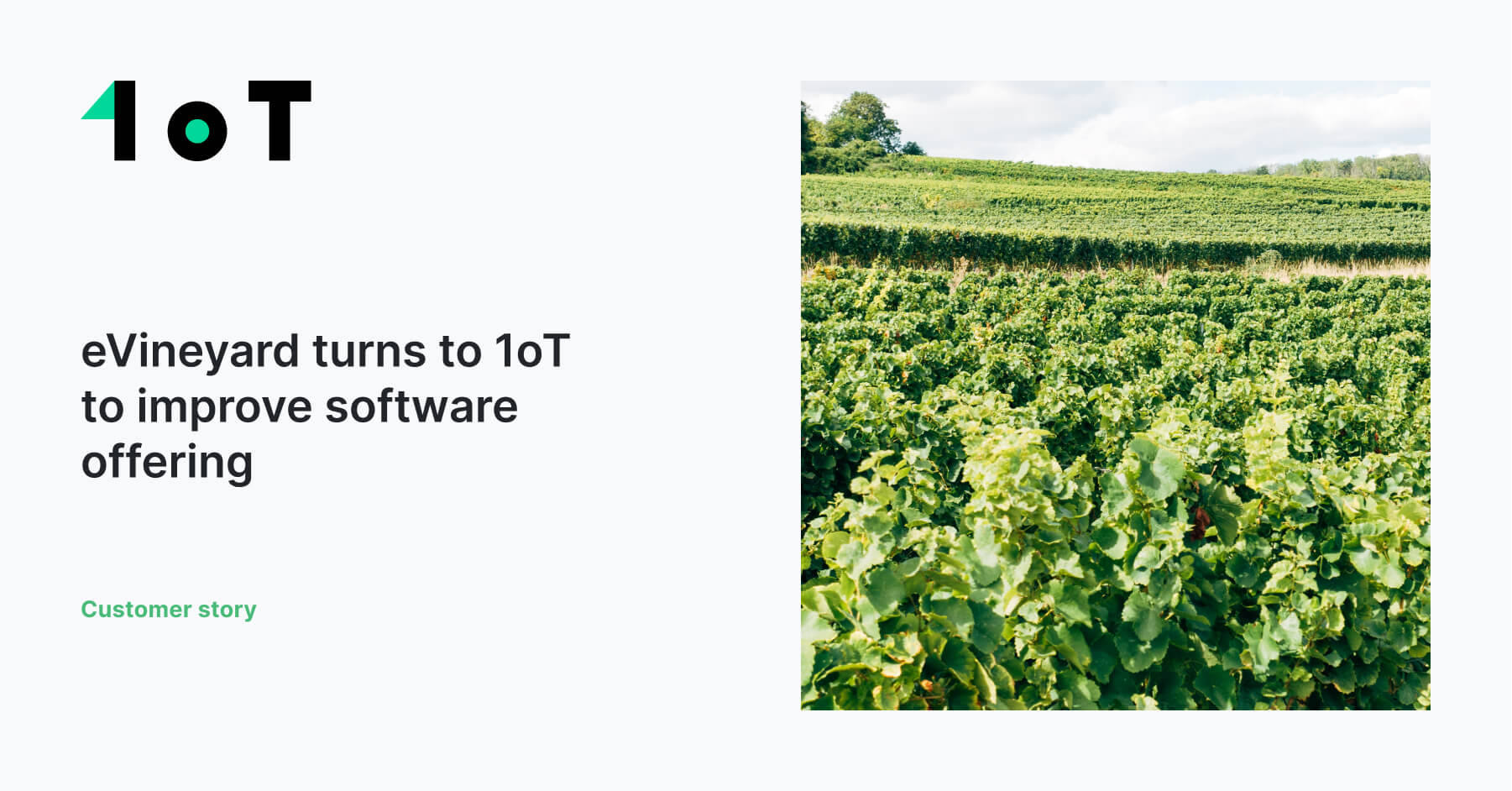 Article cover image for eVineyard turns to 1oT to improve software offering